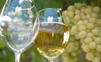 Бели Вносни Вина - топ цени - Онлайн магазин за алкохол Ноков и Син