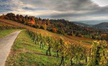 винарна Дамяница